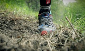 Angmering Trail Runs 10k & 10m @ Fox Pub Arundel Rd | Patching | England | United Kingdom